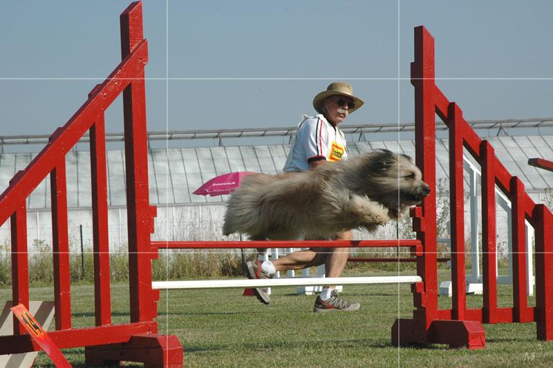 Blog Canin Alexandre C. - APPL - Cliquez-ici pour agrandir la photo